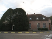 A village chapel embraced by monumental Taxodium trees protecting the house on the north side