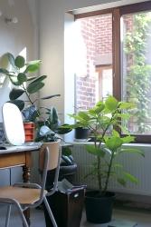 Plants ensure fresh air inside.